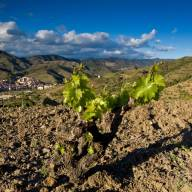 La DOQ Priorat no cobrarà les quotes als cellers mentre duri la crisi del COVID-19